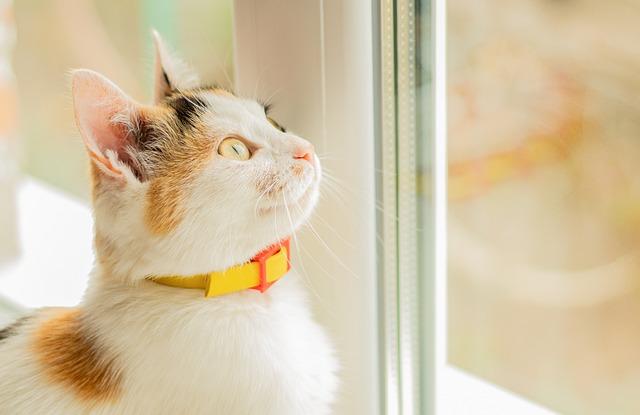 Металлопластиковое окно и кот